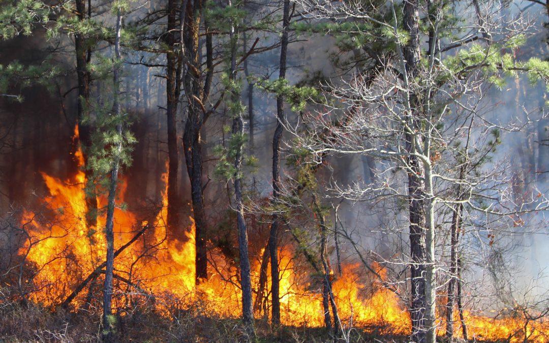 RCB: Duże zagrożenie pożarowe w polskich lasach