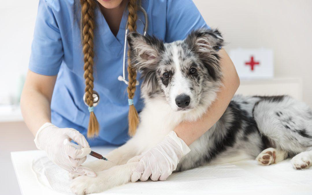 Brak kontroli niebezpiecznych środków dostępnych w leczeniu zwierząt