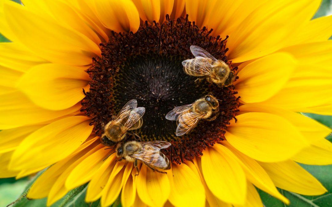 Min. Środowiska: bez pszczół przeżyjemy najwyżej 4 lata