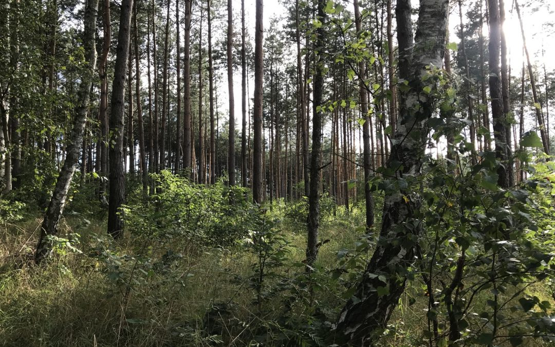 Sezon grzybobrania trwa. Za co grożą mandaty w lesie?