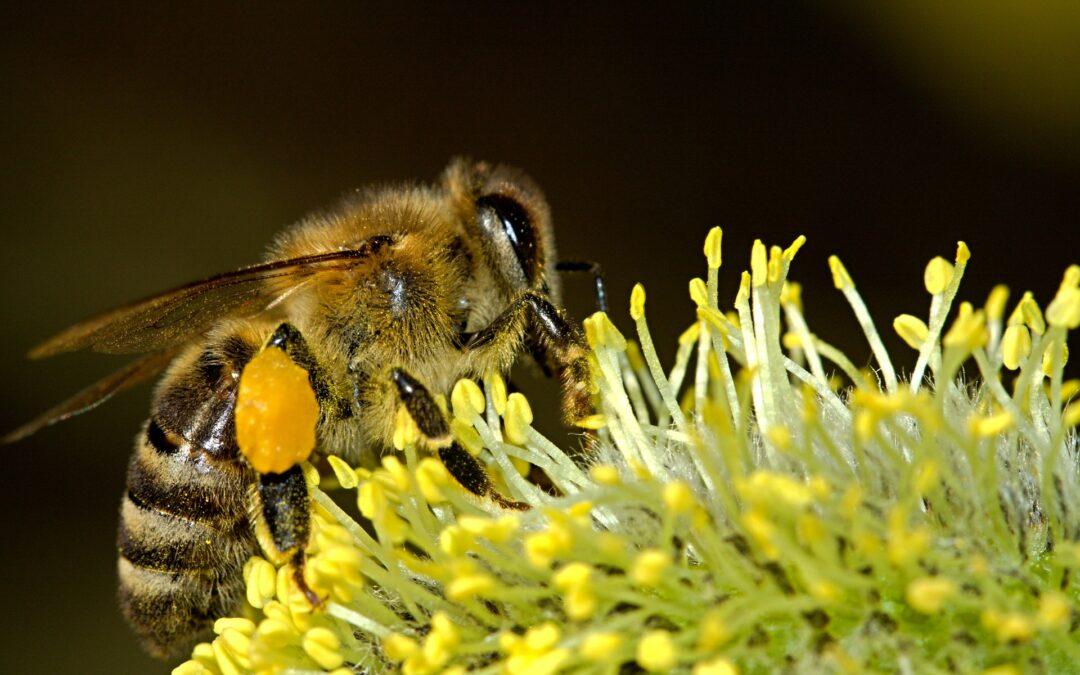 Ukąszenia, użądlenia i ukłucia owadów – jak się zachować?